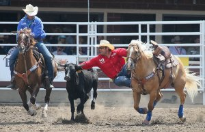 博牛  Photo Credit: Mike Ridewood / Calgary Stampede