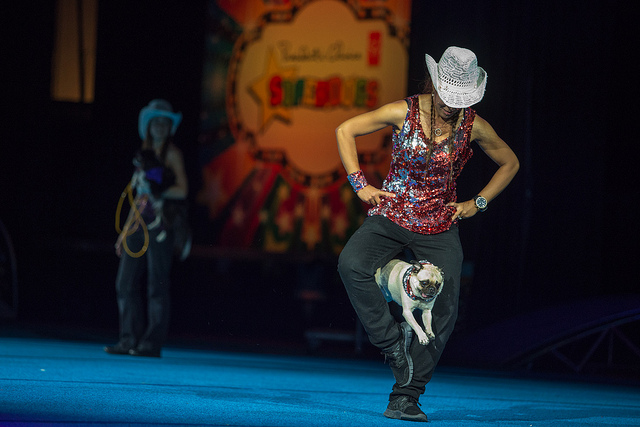 Cowgirl In Cowtown Ending Calgary Stampede With Rangeland