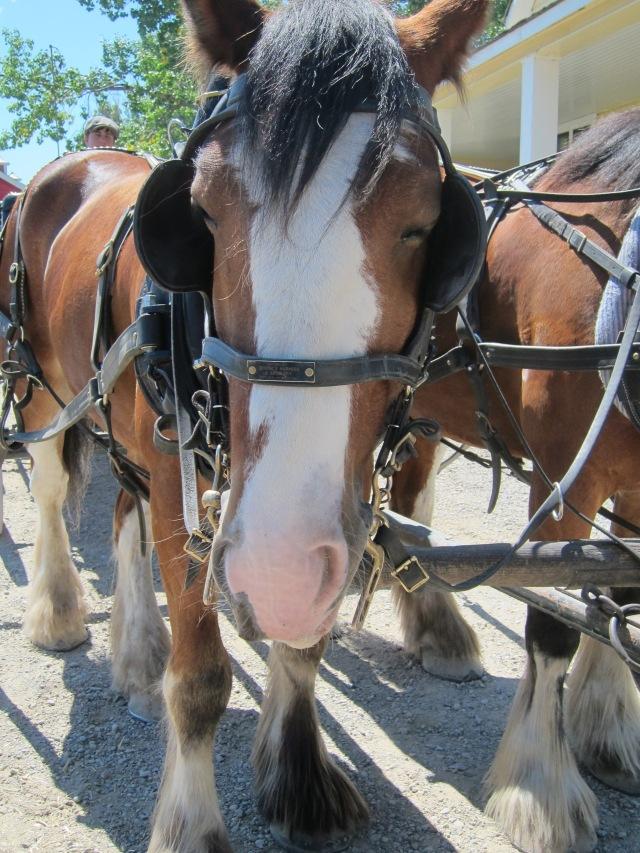 horse heritage park calgary